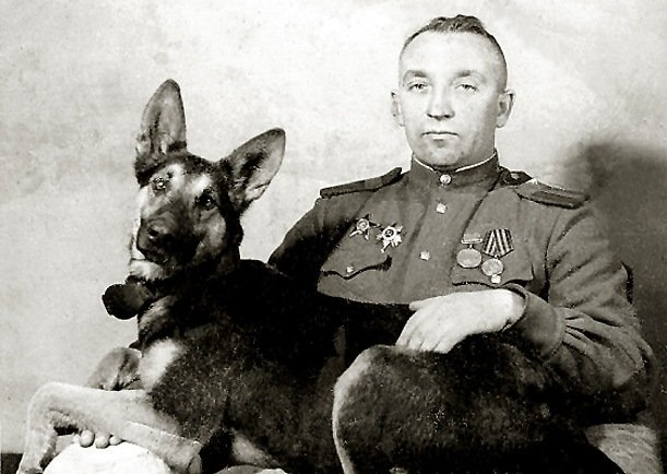 Een boek als monument voor honden in oorlogstijd